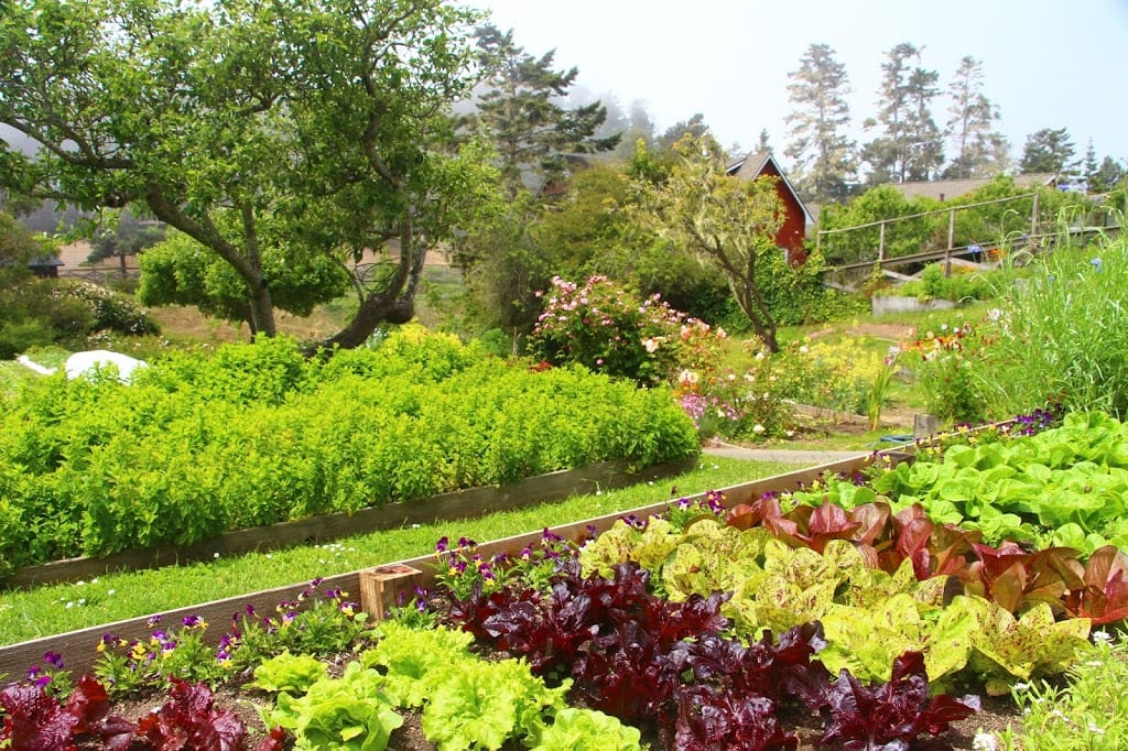 Certified-organic vegetable gardens at Stanford Inn by the Sea
