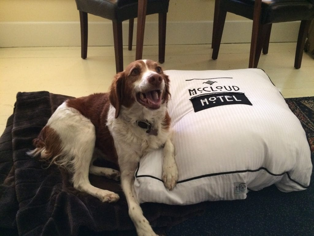 Wagging Tails Welcome at the McCloud Hotel