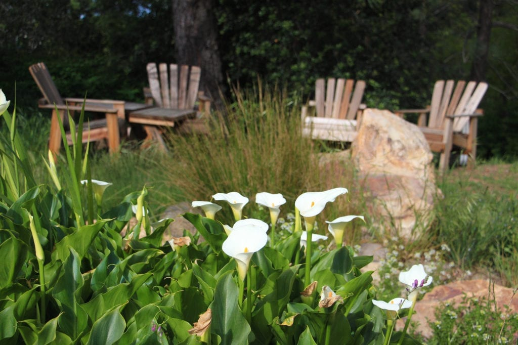 Calla lilies near the pond at Orchard Hill Country Inn