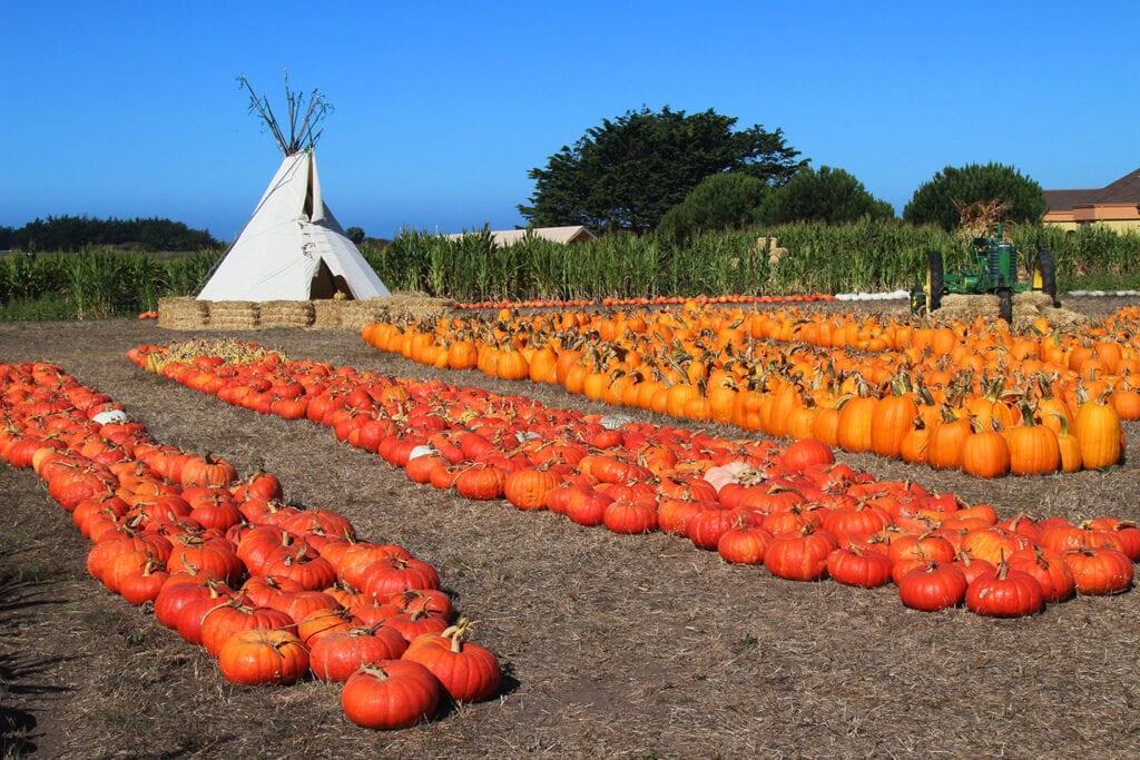 Farmer Johns Pumpkin Farm