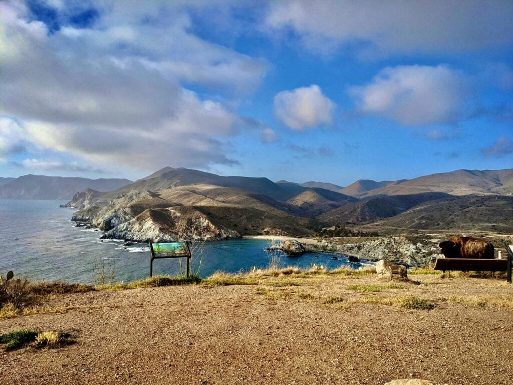 View from Catalina Island with a bison