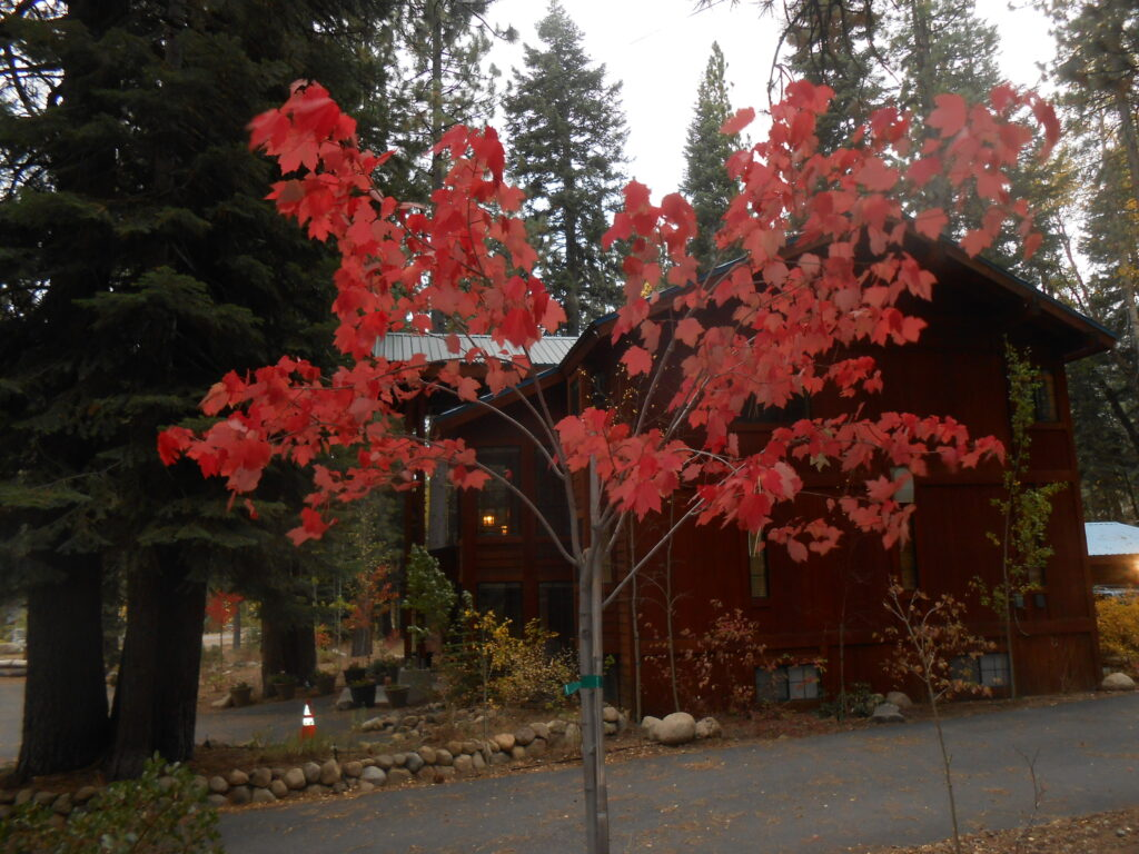 Fall color at Donner Lake Inn